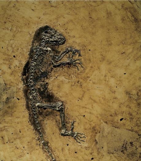 Bijzondere fossielen in museum in Denekamp