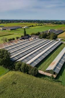 Zorgt deze fokkerij voor nertsenplaag in Oosterwolde en Oldebroek?
