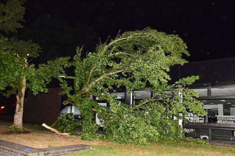 Een boom in het gemeentepark sneuvelde en kwam gedeeltelijk op de bib terecht.