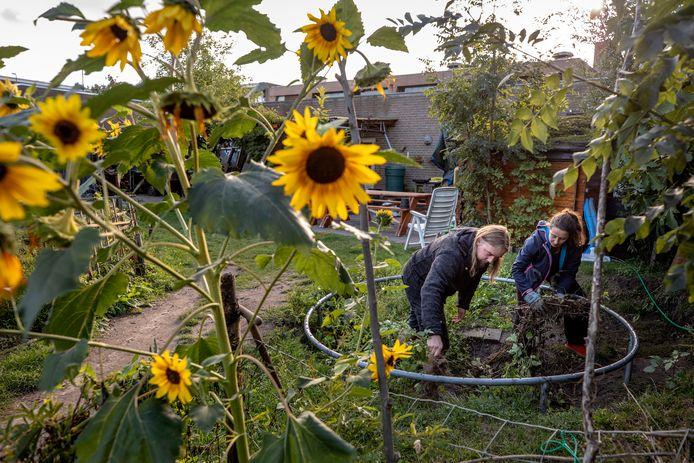 Meindert de Vos en rechts Sophie Gruijters werken in de tuin, met op de achtergrond de Patio.