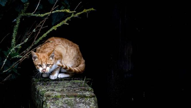 Vzw voor zwerfkatten De Snorhaar krijgt financiële steun van Tielt-Winge
