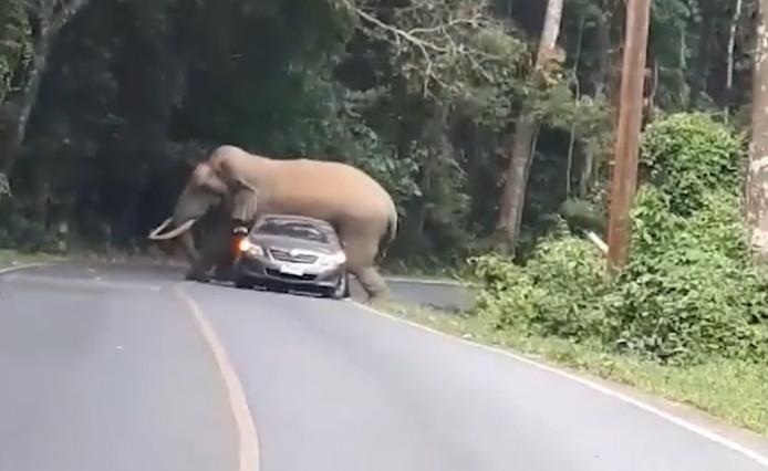 Un éléphant écrase une voiture dans le nord-est de la Thaïlande.