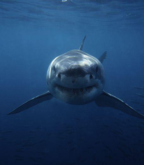 Un pêcheur australien mordu par le requin qu'il venait de pêcher