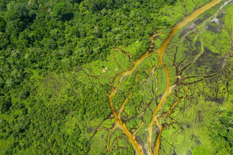 Regenwoud in het Congo-bekken. Bos zou hier snel verdwijnen, maar klopt dat ook? Beeld Getty Images