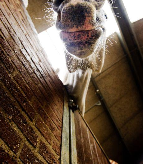 Paardenbeul zaait verderf
