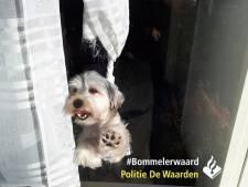 Hond draait zich vast in de gordijnen, agenten tikken ruit in