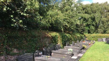 """Bloemendief aan het werk op kerkhoven Sint-Laureins: """"We denken aan camerabewaking"""""""