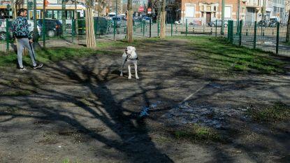 Meer losloopzones voor honden gevraagd