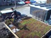 Dak vol vetplantjes tegen wateroverlast in Enschede