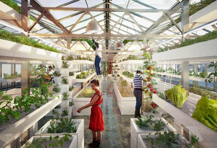 'We gaan hier jaarlijks 45 ton groente telen', zegt Mark Durno, directeur Benelux van het Zwitserse Urban Farmers. Beeld Urban Farmers