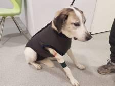Baasje én hond spoorloos na heftig bijtincident: 'Neem je verantwoordelijkheid'