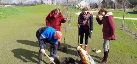 Gratis fruitbomen in de Achterhoek als opmaat voor een bosplan