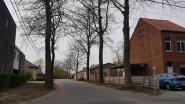 Bomen in Ommegangstraat Bellem weg of niet? Buurt is verdeeld