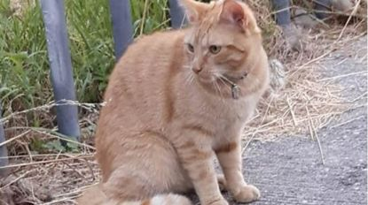Kat in Nederland overleden na vuurwerk in achterste