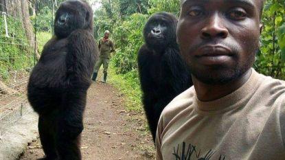 Hilarische gorilla-selfies uit Virunga-park in Congo gaan viraal
