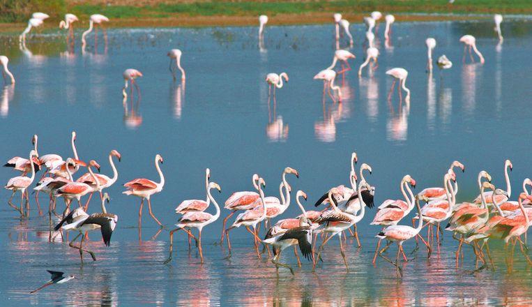 In het park leven 360 soorten vogels, waaronder roze flamingo's.