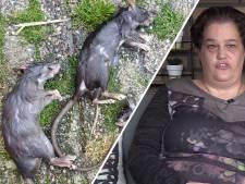 Deze woonwijk had last van ratten: 'Ze liepen op straat, in slaapkamers'