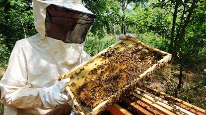 Pesticiden schadelijk voor bijen