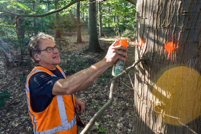 Tom van Duuren is in het Noorderbos bomen aan het blessen.