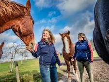 Kelly en Karin vrezen drama bij vreugdevuur naast hun bejaarde paarden: 'Dan is er geen houden aan'