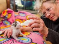 'Wonderkitten' Laki kwam levend uit de buik van haar dode moeder - en het gaat steeds een stukje beter