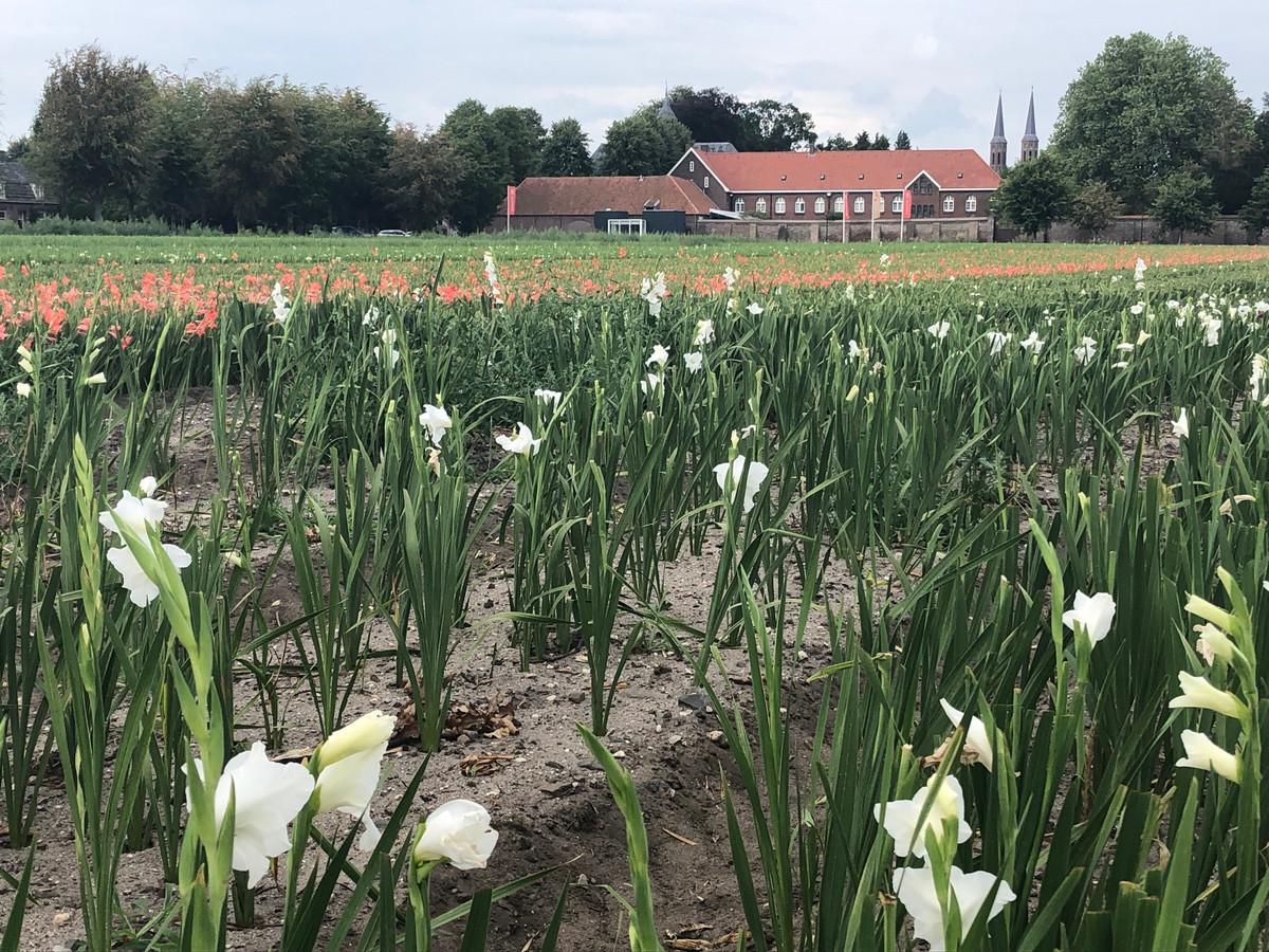 Met dank aan de gladiolen een fraai uitzicht op het klooster en het museum.