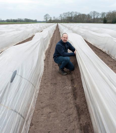 Genoeg personeel, maar aspergetelers Salland vernietigen toch halve oogst