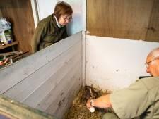 Rosemarijn (73) zamelde na 'heel bijzondere ervaring' geld in voor de reekalfjesopvang in Soestduinen