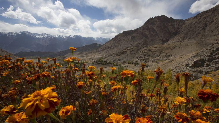 De omgeving van Ladakh Beeld getty