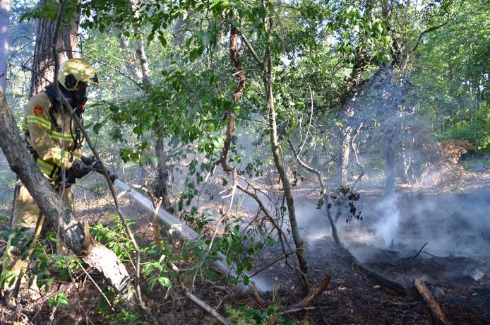 Op de Rijnweg en de Zelledijk in Hengelo zijn donderdagochtend kort na elkaar kleine bosbranden ontstaan. Of het om brandstichting gaat, is niet bekend.