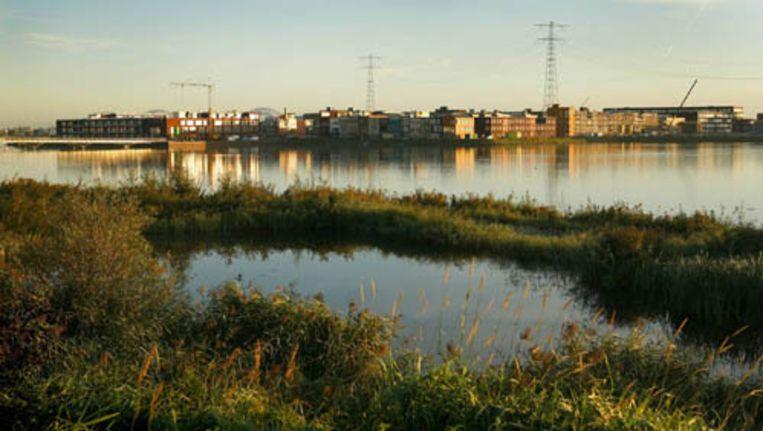 De natuur rond Steigereiland is er beter aan toe dan voor de bouw van IJburg. Foto Floris Lok Beeld