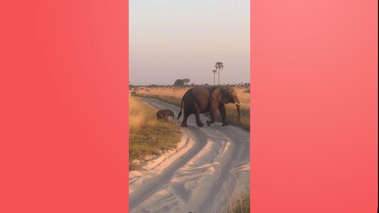 Nog in onze VIRAL3: Dit schattige olifantje verliest even zijn evenwicht.