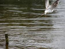 Brandweer redt aan visdraad bungelende meeuw in Amersfoort