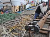 Europa neemt nog geen besluit over toekomst van pulsvisserij