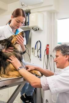 Gezocht in en rond Hengelo: honden die bloed af willen staan