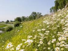 Waterschap Rivierenland helpt dieren en planten een handje door anders te laten maaien