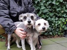 Nieuw baasje voor in De Els gedumpte hondjes 'Jos en Els'