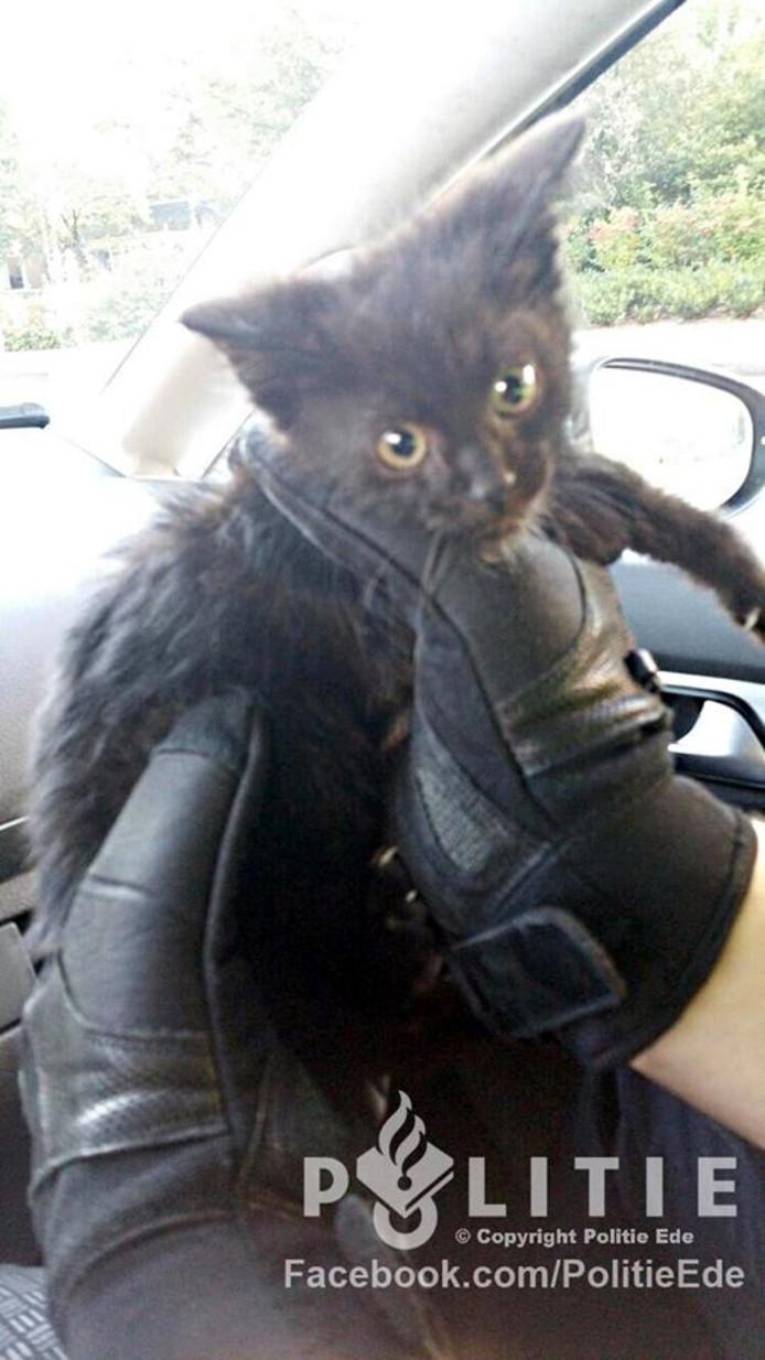 De zwarte kitten in kwestie