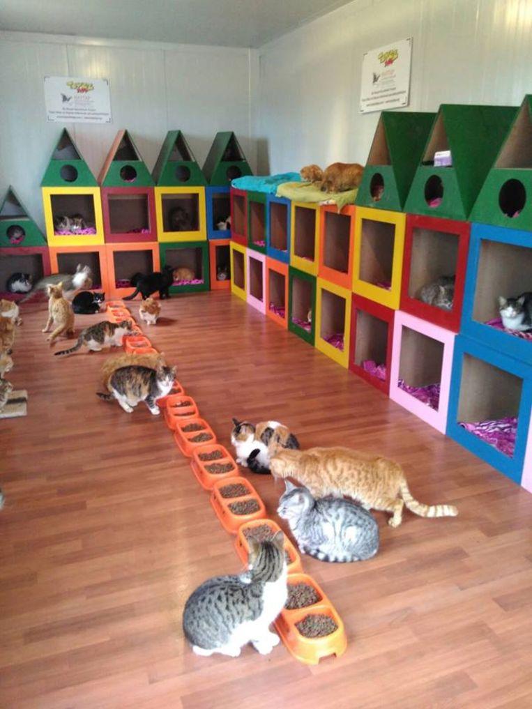Het verblijf van de katten in Samsun.