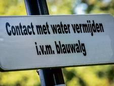 Waarschuwing blauwalg Dijkstrand en Staverse kade op Urk