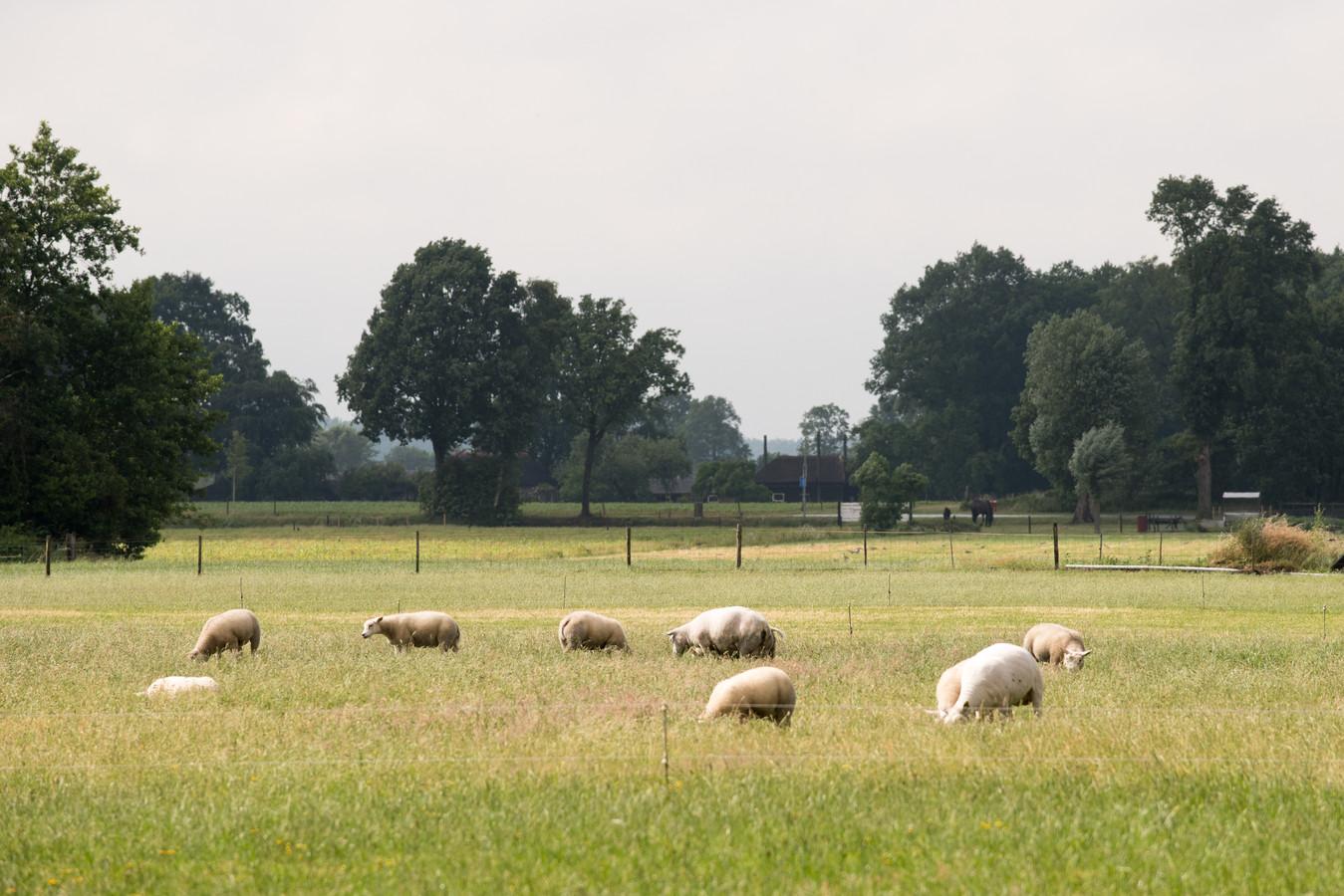 't Hul Noord in Nunspeet. In deze weilanden verrijst in de toekomst mogelijk een nieuwe woonwijk.