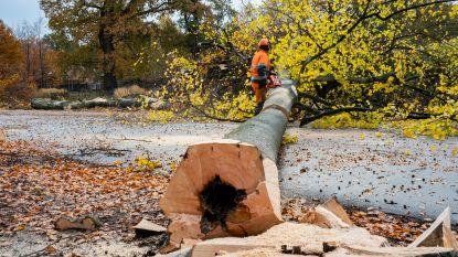 VIDEO: Bomenkap in Gemeentepark gestart