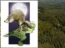 Precies zes maanden keutels aan de lopende band op de Veluwe: de wolf is officieel terug in ons land