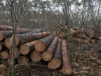 Natuurpunt kapt 1,5 hectare in Kelderbos, gemeente betreurt actie