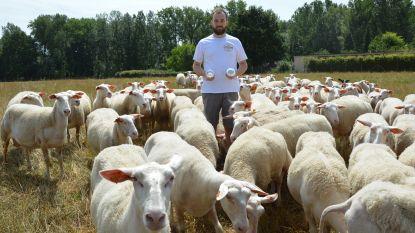 """Schapenboer Laurens zoekt landbouwgrond om eigen dierenvoeder te telen: """"Door coronacrisis blijkt hoe belangrijk lokale voeding is"""""""