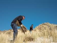 Nieuw helmgras voor Schouwse duinen na zuidwesterstormen