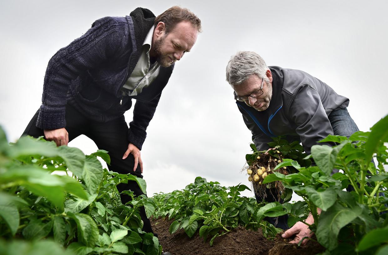 Herman van Bekkem (L) krijgt uitleg over onkruidbestrijding van aardappelteler Dingeman Burgers, die werkt volgens de richtlijnen van het PlanetProof-keurmerk. Beeld Marcel van den Bergh / Volkskrant