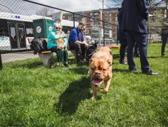 Voorlopig geen hondenlosloopweide voor Machariuswijk