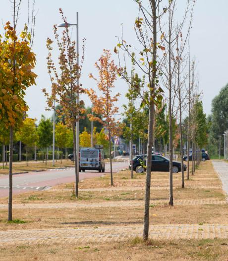 Bomenstad van Europa maakt zich zorgen om haar bomen