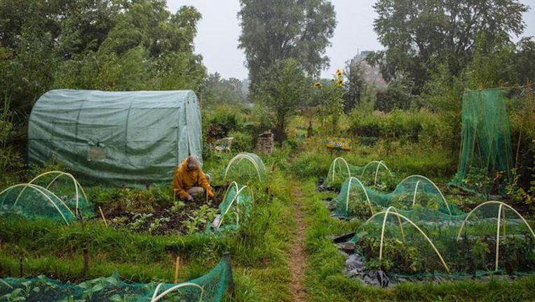 Tuinieren is beweging in de buitenlucht, en het levert verse groenten op Beeld Marc Driessen